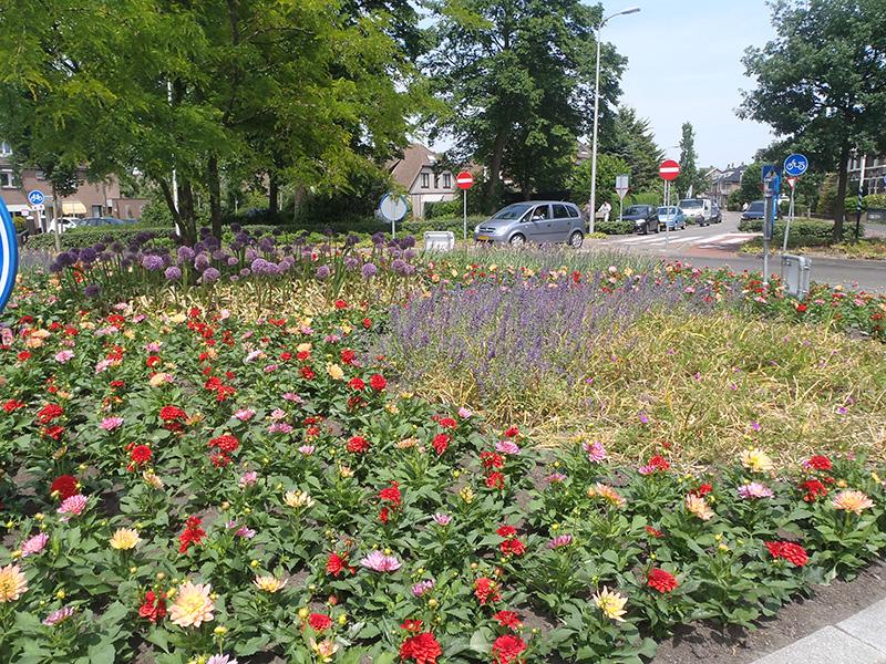Amalia Rotonde in Lisse wordt voorbereid op een nieuwe bloei periode