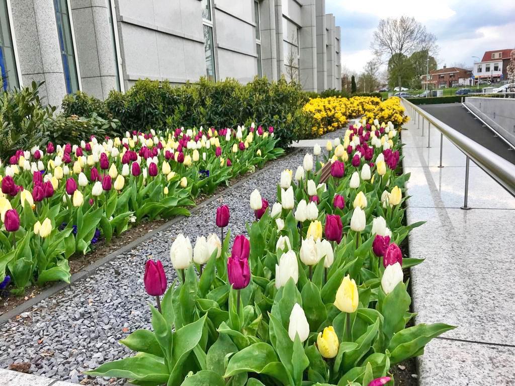 the-hague-netherlands-temple-tulpen-langs-zijgevel
