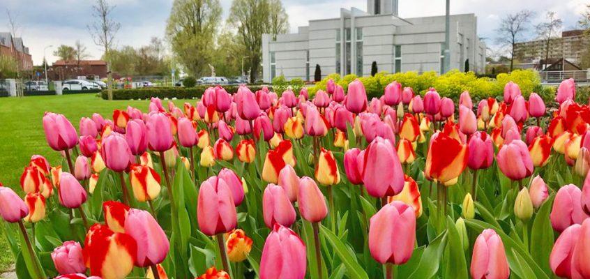 De kleurrijke tuinen van The Hague Netherlands Temple