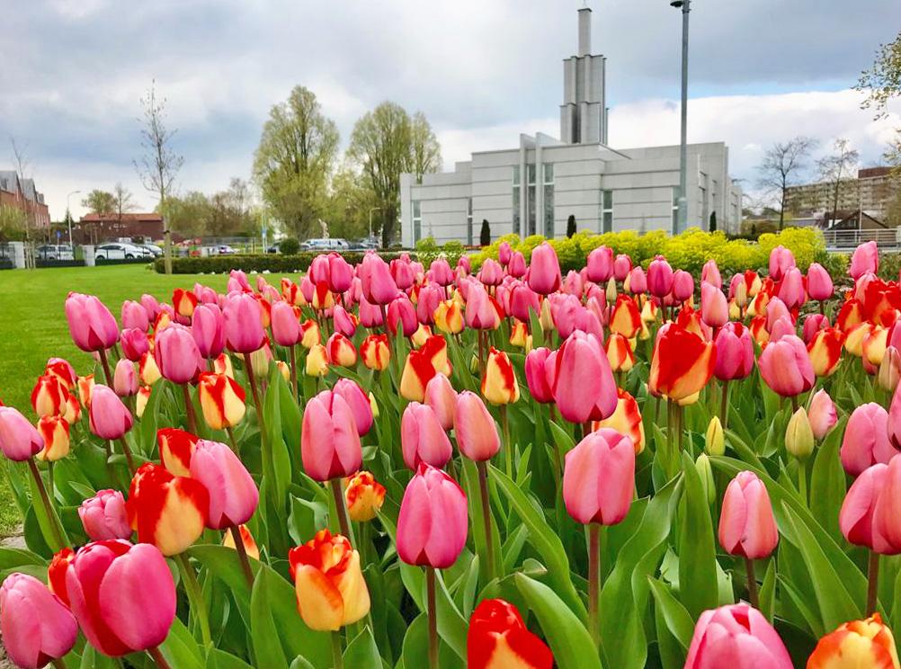 the-hague-netherlands-temple-tulpen-met-tempel-op-achtergrond